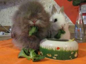 lapins coeur d'artichien