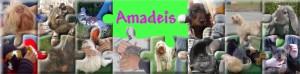 banniere-amadeis