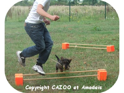 amadeis et CAZOO mediation animale