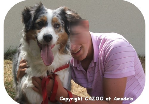 CAZOO et amadeis mediation animale