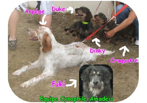 CAZOO et amadeis mediaition animale