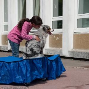 coeur d'artichien mediation animale 44 Nantes
