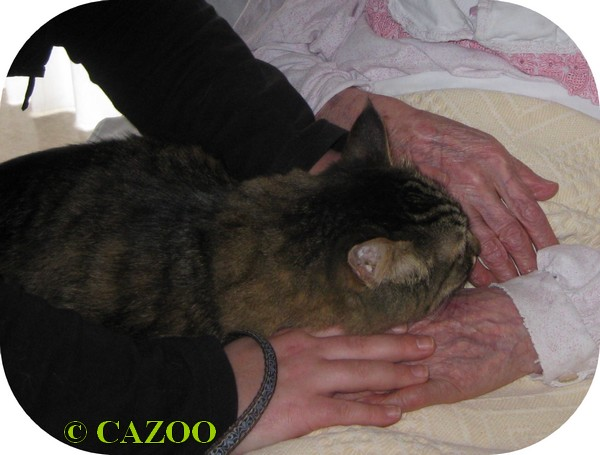 mediation animale nantes CAZOO coeur d'artichien