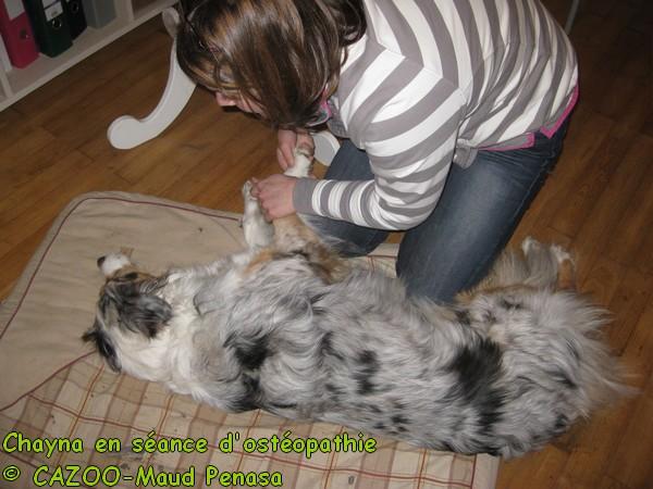 mediation animale osteopathie coeur d'artichien