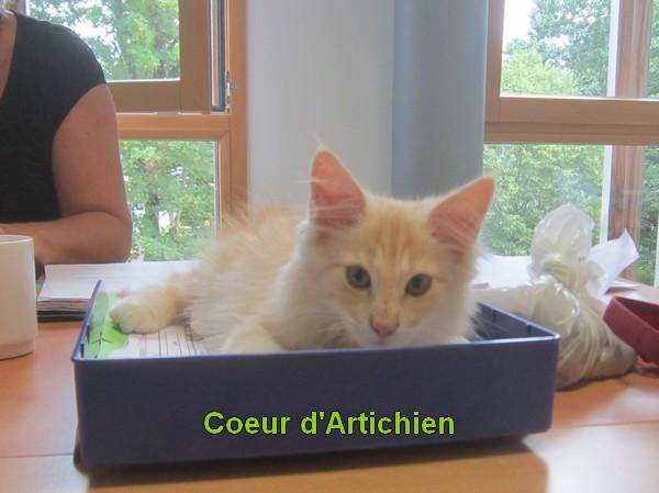 Comment éduquer un chat pour la médiation animale ? par Coeur d'Artichien médiation animale nantes