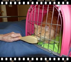chat mediateur