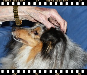 Gandhi chien mediateur pour coeur d'artichien