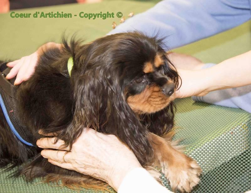 coeurdartichien mediation animale