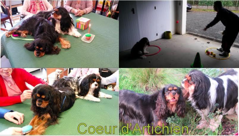 coeurdartichien_mediation_animale