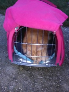 cape cage mediation animale
