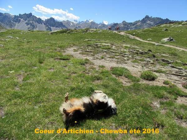 vacances_chewba_coeurdartichien
