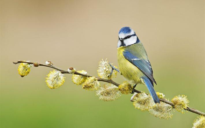 coeur d'artichien l'oiseau_branche