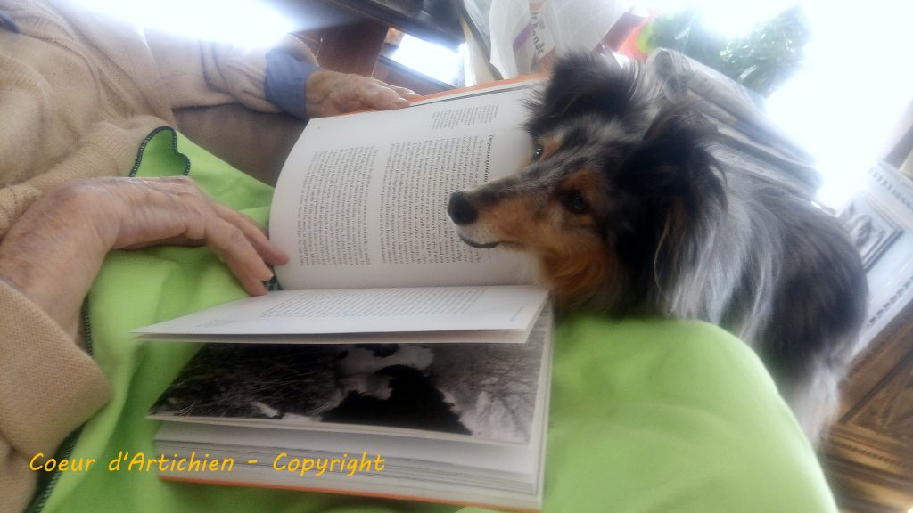 lecture assistée par l'animal