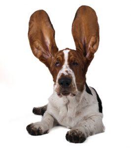 chien ecouteur