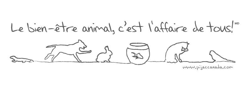 bien etre animal