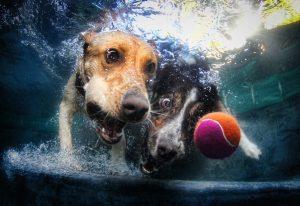 chien piscine2