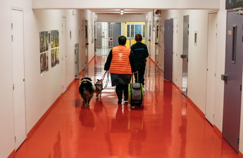 coeurdartichien chien prison